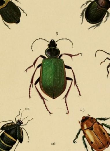 Масштабное снижение численности насекомых обошло США стороной