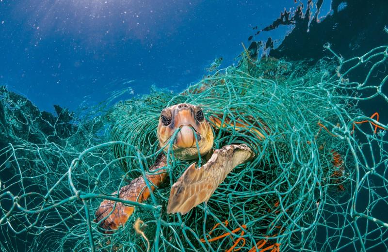 Пластик: проклятье мирового океана
