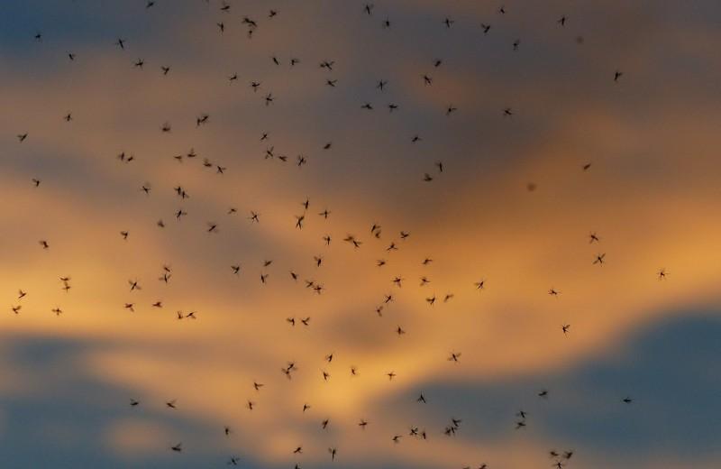 Комариное нашествие в Таганроге: видео
