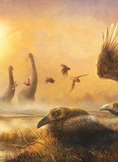 На Мадагаскаре нашли кости странного «зубастого тукана», жившего рядом с динозаврами