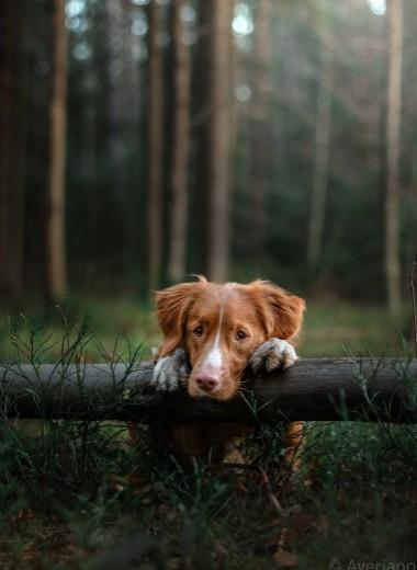 Ваша собака знает, что вы чувствуете