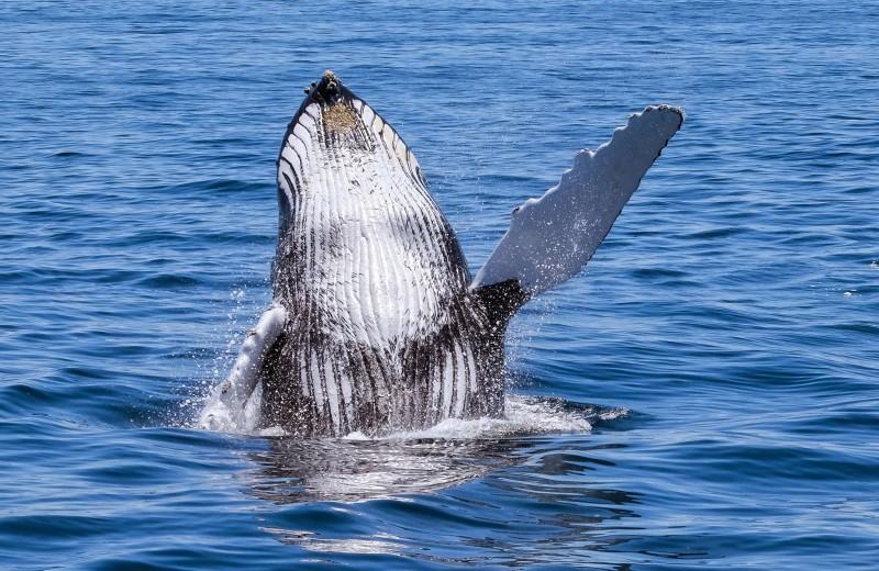 Люди хором поют песни китов: видео