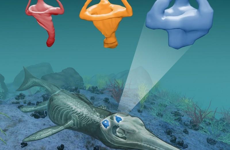 Предки современных крокодилов подражали китам, чтобы доминировать в морской среде
