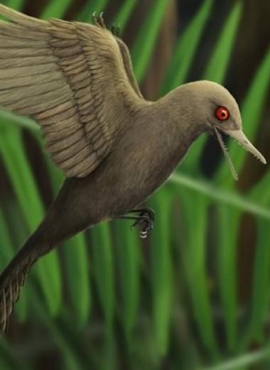 В бирманском янтаре нашли самого маленького динозавра. Он размером с колибри