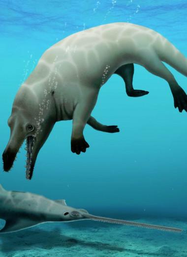 В Египте обнаружили древнего кита с четырьмя лапами