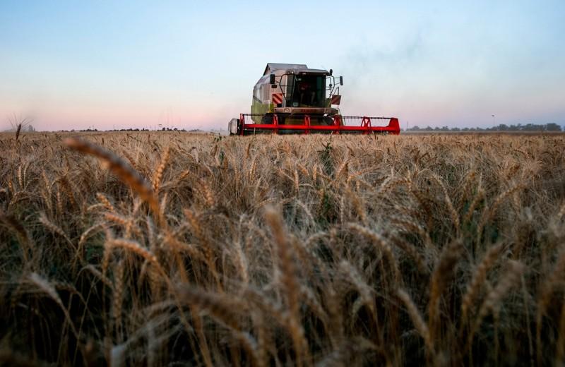 Зерновой лидер проращивается в госбанке