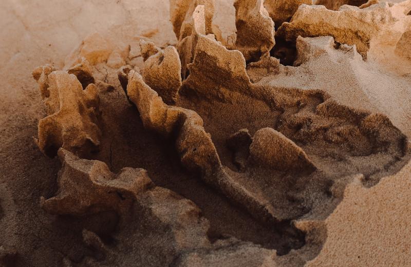 Первых кроманьонцев заподозрили в охоте на хищников ради меха и материалов для украшений