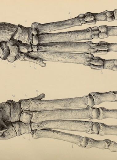 Гиены мигрировали вместе с древними людьми