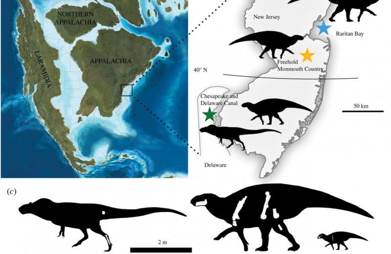 У тираннозавров были кузены, жившие на Восточном побережье Северной Америки