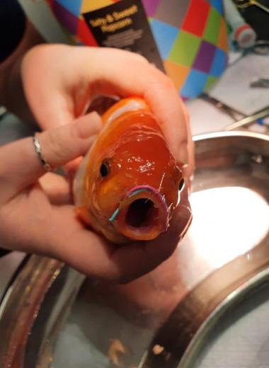 Прожорливая золотая рыбка сломала челюсть. Ей пришлось делать операцию