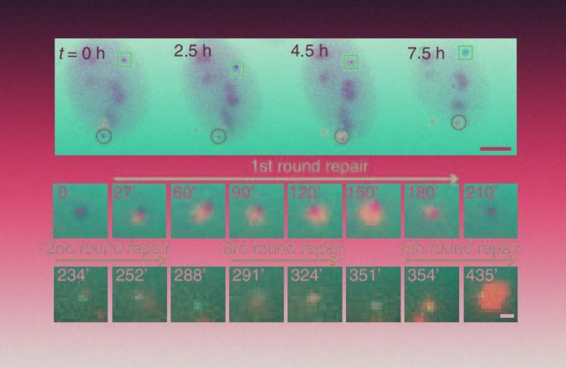 Фотоиндукция увеличила скорость CRISPR в 100 раз