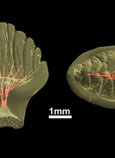 Якутских стегозавров уличили в частой смене зубов