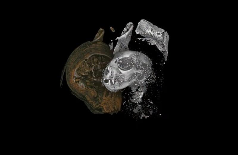 Как выглядят мумии изнутри: современные технологии