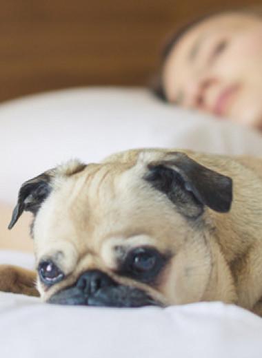 Как увеличить глубокий сон: подробный рассказ оважной стадии ночного отдыха