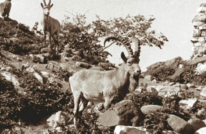 Когда в России появились первые зоопарки?