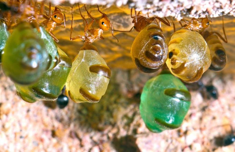 Живые медовые бочки