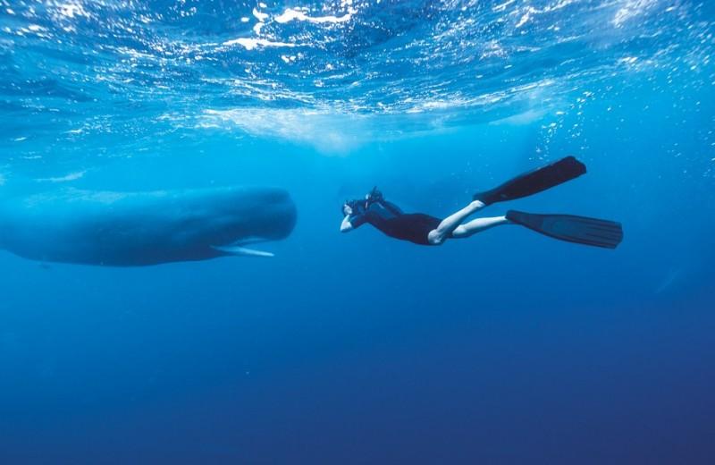 Без права на вздох: фридайвер фотографирует китов