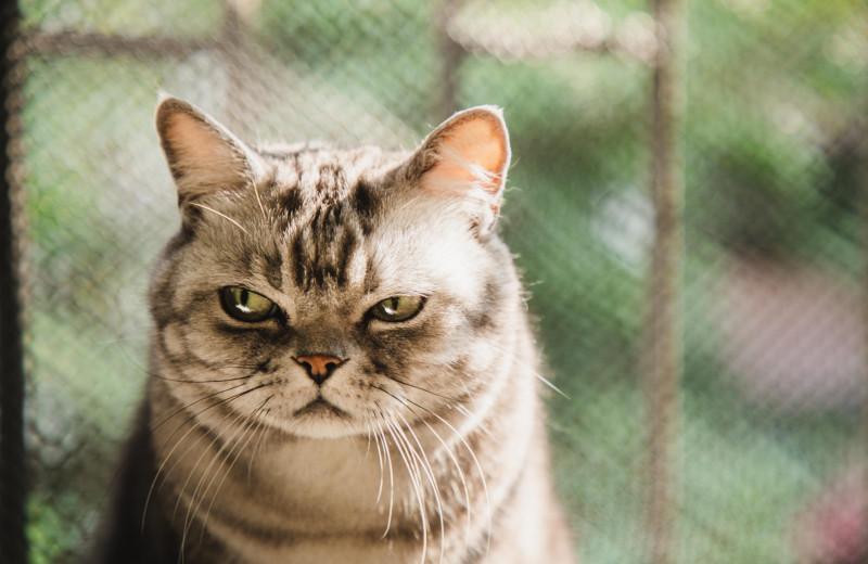 12 вещей, которые раздражают твоего кота