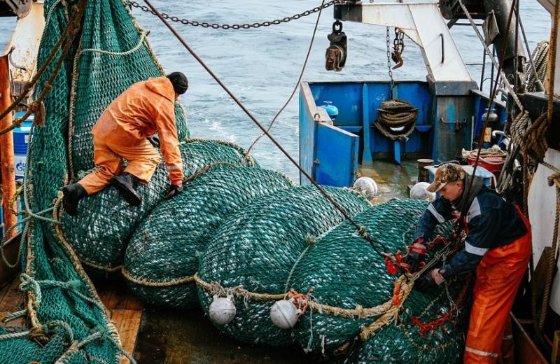 «Как в плохом анекдоте»: зять миллиардера Тимченко мог запустить новый передел в рыбной отрасли