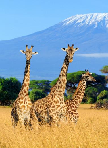 Гид по Танзании