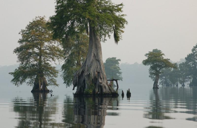 Грейт-Дисмал: Великое мрачное болото