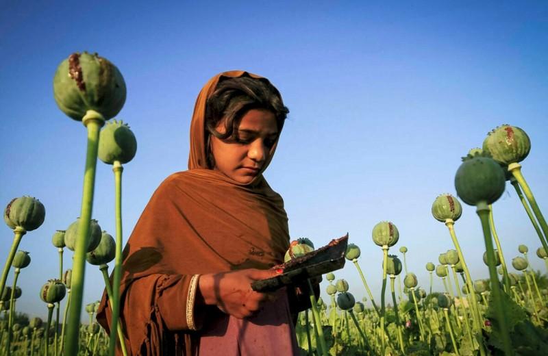 Технологии в наркотрафике: на опиумных плантациях Афганистана используют солнечные батареи. Площадь полей выросла вдвое
