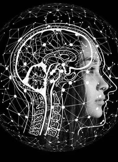 Теперь сосуды мозга можно разглядеть с точностью до клетки