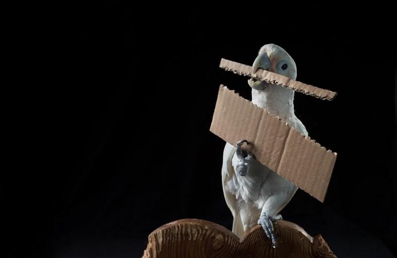 Птичьи мозги: что мы знаем об интеллекте пернатых?