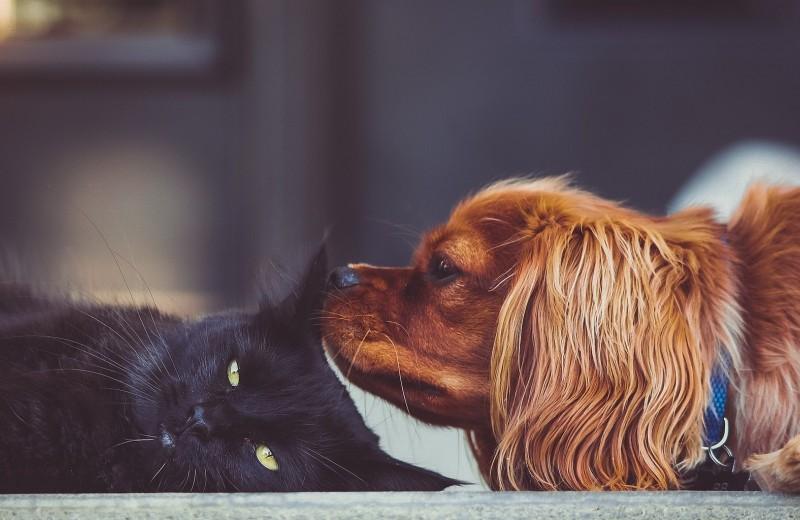 15 домашних питомцев - от самых любящих до тех, кому на вас наплевать