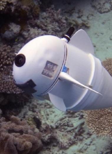 Роборыба шпионит за обитателями морей: видео