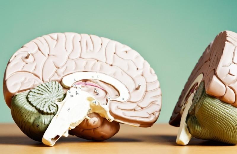 Что будет с человеком, если ему ампутировать половину мозга