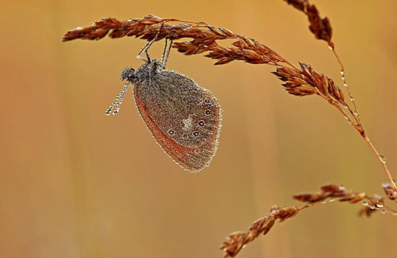 «Летающее масло» и «драконья муха»: 7 очень странных названий насекомых в английском