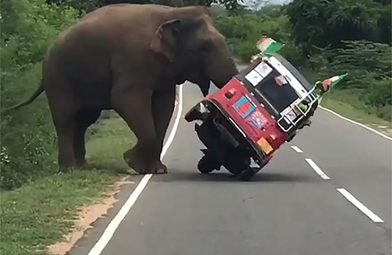 Как не надо кормить слонов: видео