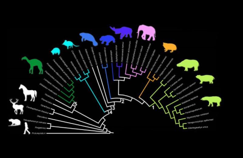 Палеонтологи разобрались в родственных связях южноамериканских копытных