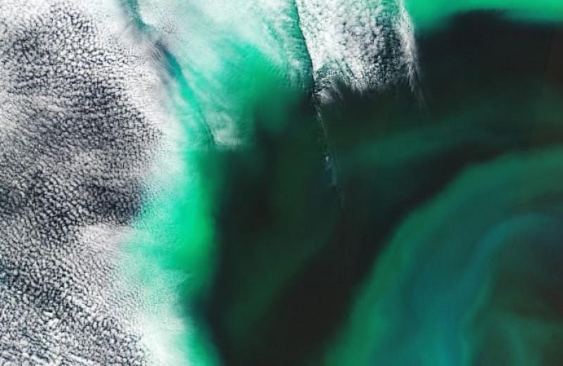 Цветущие воды Тихого океана сняли из космоса