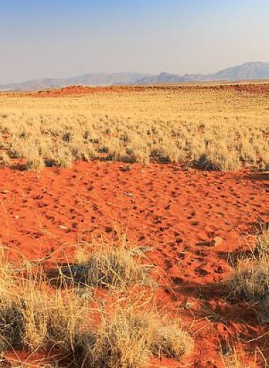 Российские ученые разгадали тайну загадочных «кругов фей» в пустынях