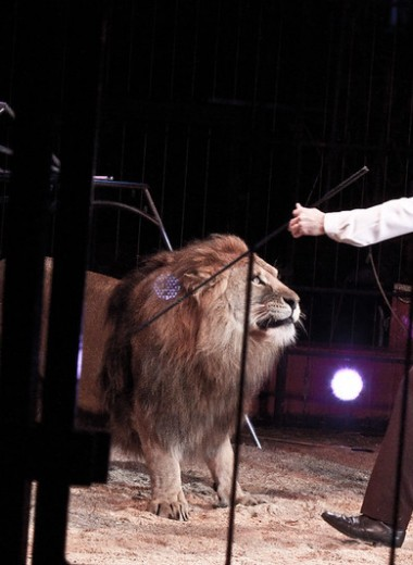 В Калифорнии запретят изделия из меха и выступления зверей в цирках