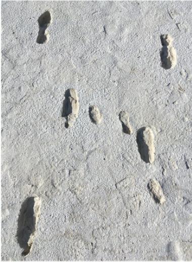 В Нью-Мексико найден самый длинный маршрут древнего человека