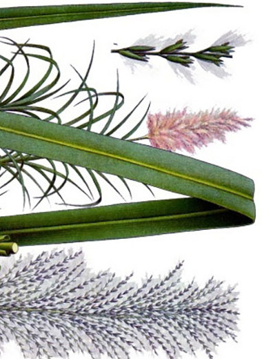 Биотопливо из сахарного тростника обвинили в выбросах закиси азота