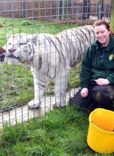 Звери в клетке: 7 страшных случаев нападения животных на людей в зоопарках