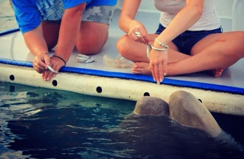 Почему кормить акулу с рук – плохая идея: видео