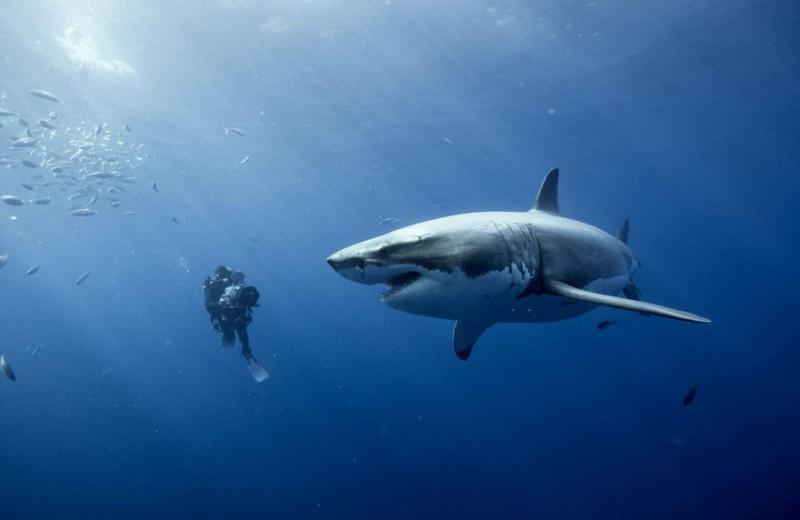 9 документальных фильмов про океан, которые завораживают