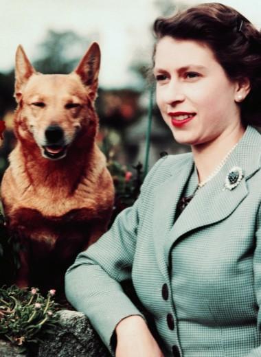 Елизавета II и ее корги: история в фотографиях