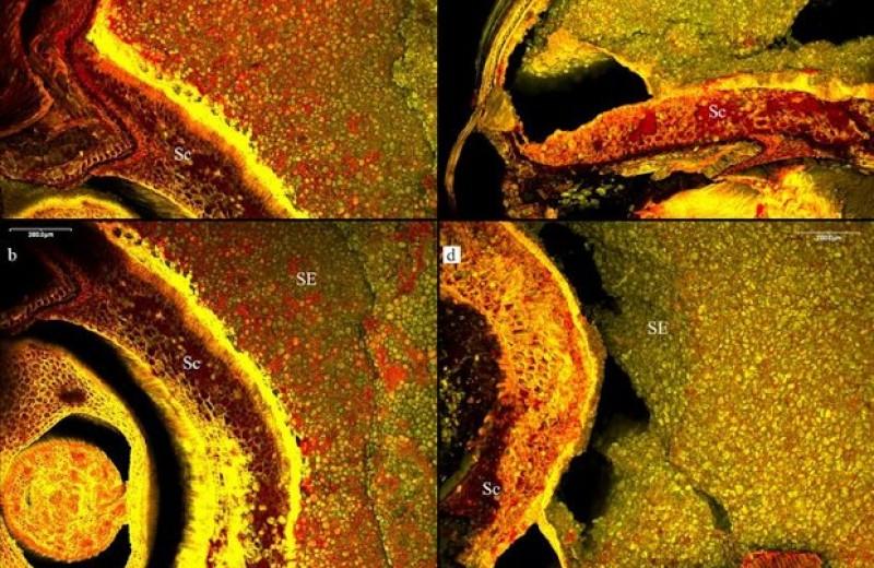 Археологи предложили новый способ поиска древнего пива
