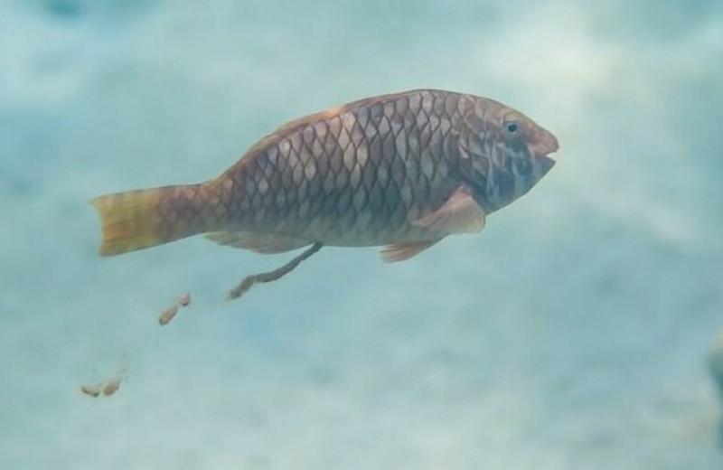 Зачем ученые подсчитывают фекалии рыб в мировом океане