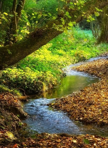 Удивительно гиблые места: как природа возвращает отнятое человеком