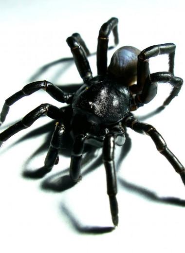 Как зоопарк помог ученым открыть новый вид пауков