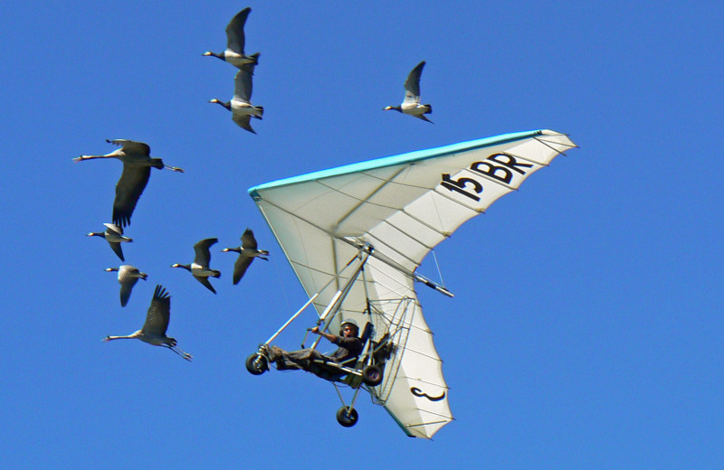 Как французский орнитолог стал вожаком стаи гусей и летал с ними на зимовку