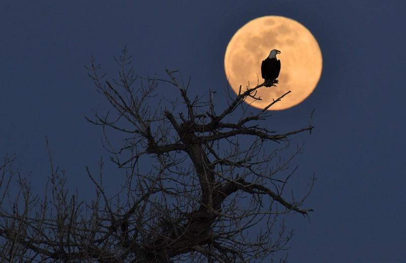 7 странных явлений, которые происходят из-за Луны на Земле