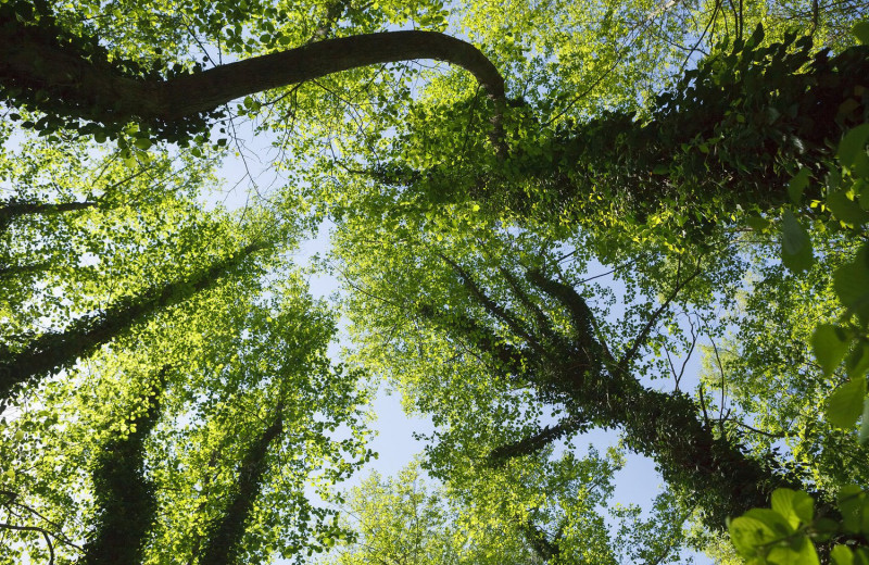 Самурский лес: чудо российской природы под ударом